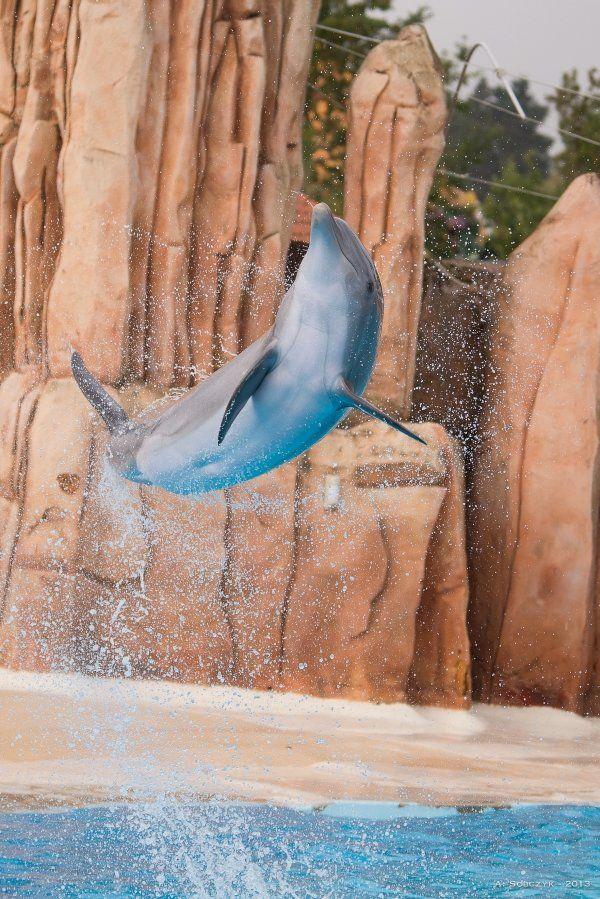 Parque Astérix, espectáculo de delfines © Sobczyk