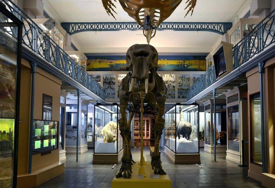 Museo Nacional de Historia Natural de París