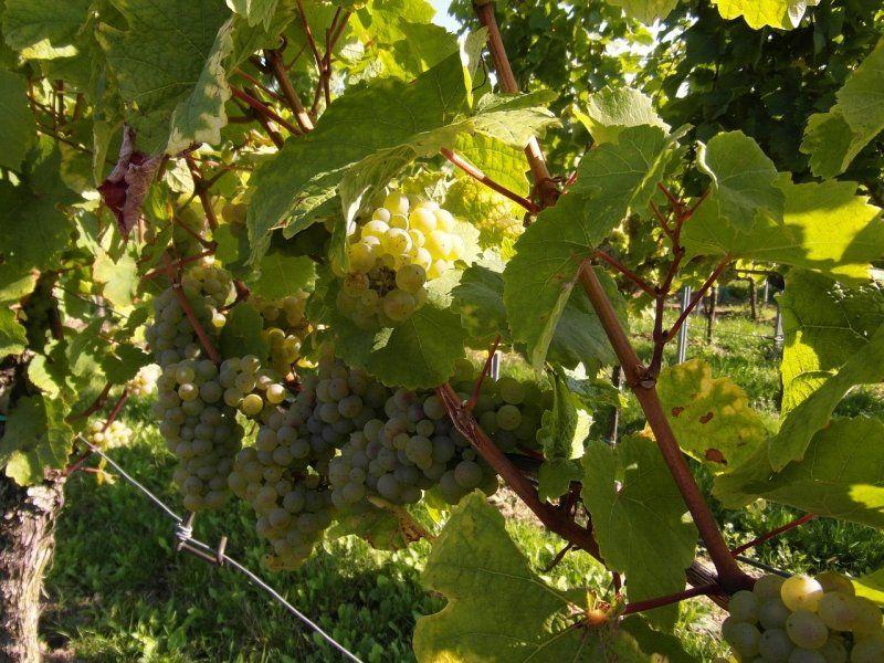 Visita a la Región de Champagne